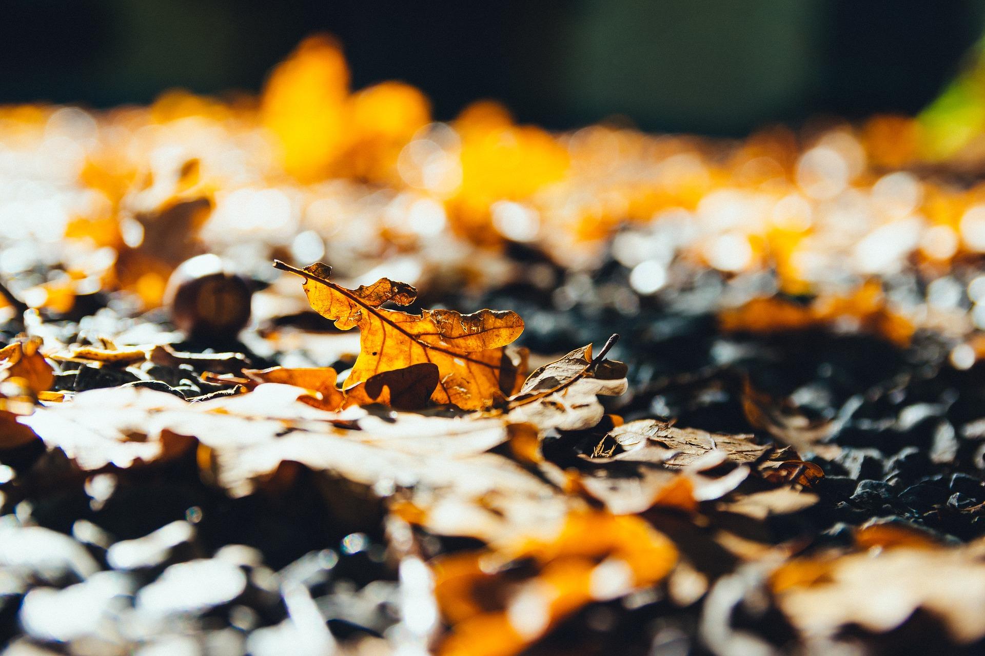 Auf dem Bild sieht man ein braunes Eichenblatt im Sonnenschein. Es liegt auf dem Boden.