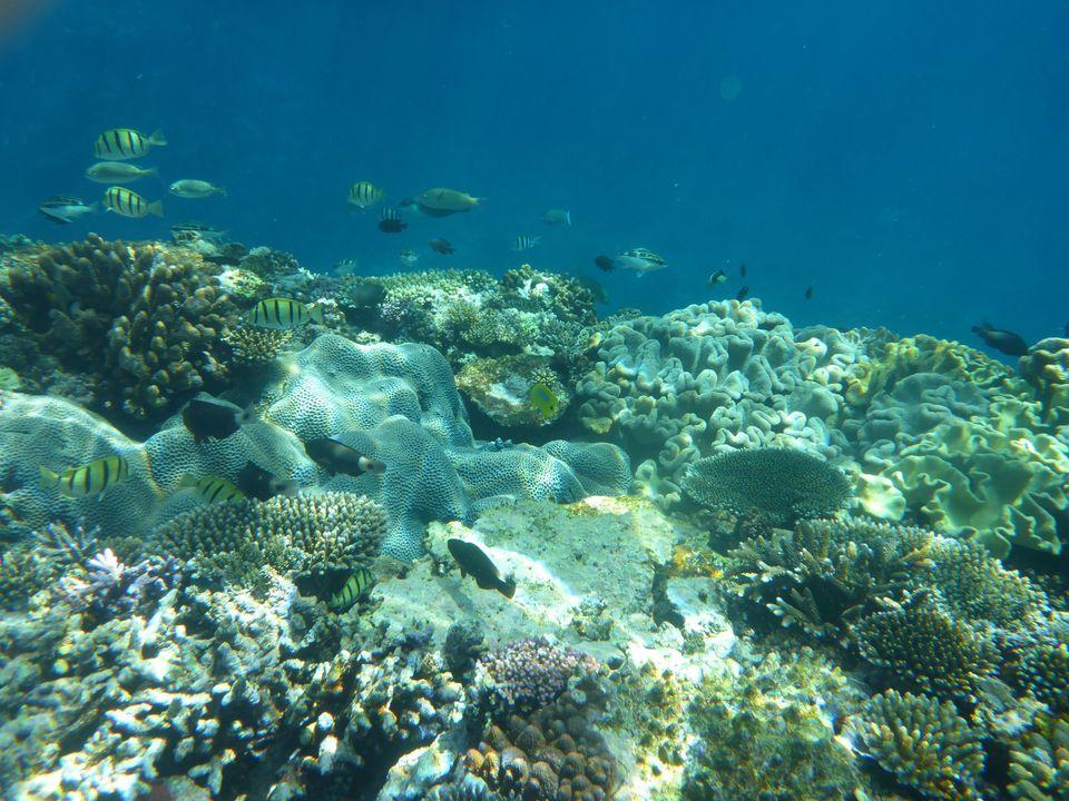 Auf dem Bild ist ein Korallenriff mit Fischen und Algen zu sehen.