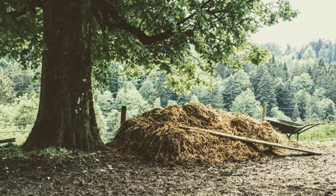 Ein Misthaufen mit einer Mistgabel unter einem Baum.
