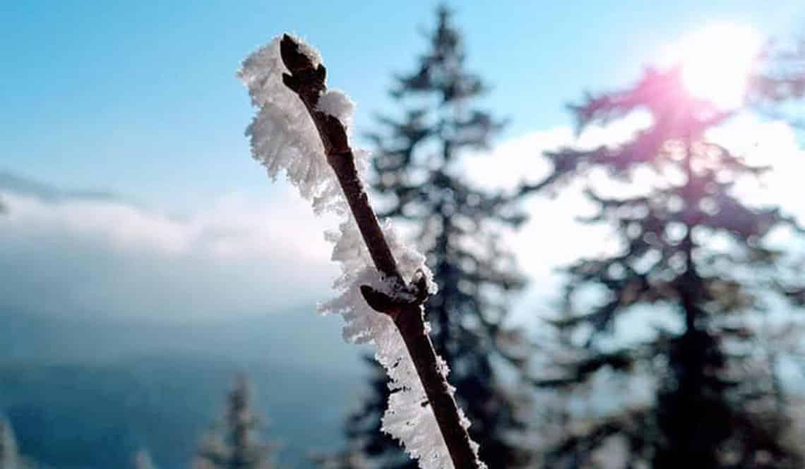 Ein vereister Zweig im Fokus. Die Sonne und Bäume im Hintergrund. Außerdem sind in der Ferne Berge und blauer Himmel.