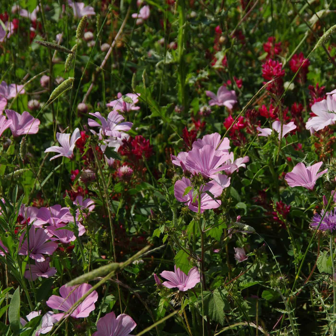 Bild einer Blumenwiese